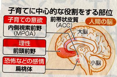 子育てと脳の役割